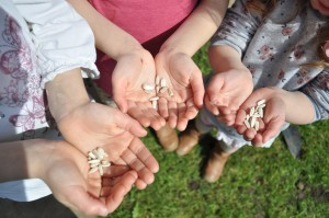 Day 59:  Planting sunflower seeds with the girls