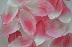 Day 314:  These gorgeously delicate tulip petals that had scattered themselves on the kitchen table