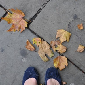 Day 525:  Autumn leaves on the ground in London this morning.  Considering we haven't really even had a summer yet it does seem a tiny bit unfair that Autumn is already on it's way.  And yet, a teeny tiny part of me is secretly quite looking forward to it - it's my favourite season :)