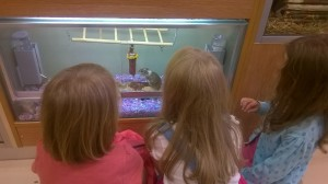 Day 180:  Popped to the shops for last minute school supplies and got coerced into visiting the pet shop too.  The joy on their faces as they watched the gerbils playing was wonderful.