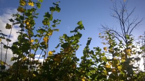 Day 233:  A sunny Autumn afternoon on a day where I feel really rather poorly :(