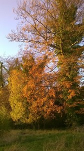 Day 251:  Gorgeous Autumn colours in the sunshine on the school run today